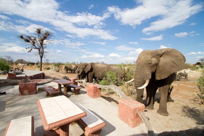 elephant-sands3