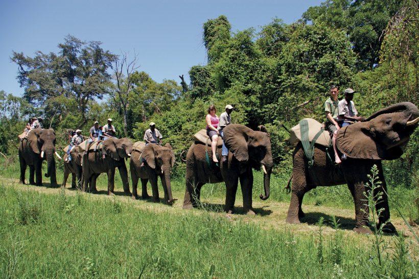 elephantwhispers