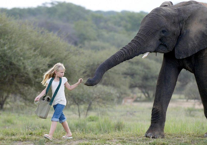 Camp_-Jabulani-Elephant_Interaction