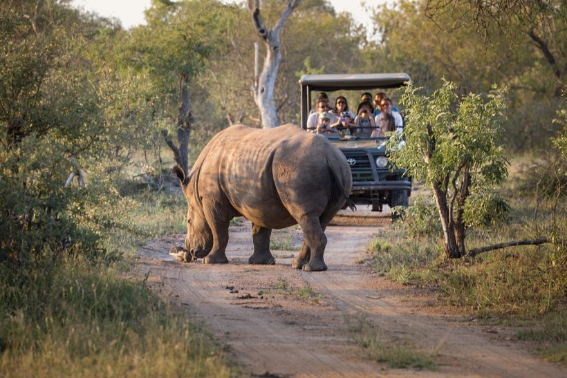 Game Drive (2)