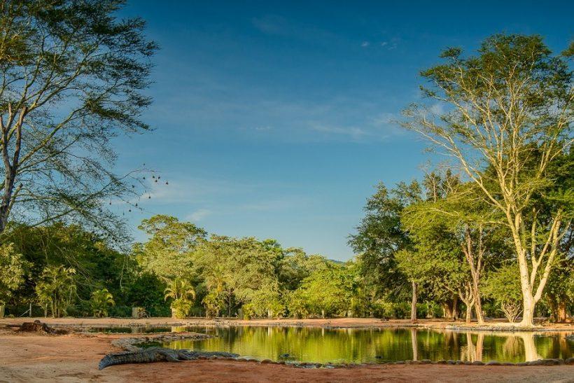 Seronera-Crocodile-farm-112