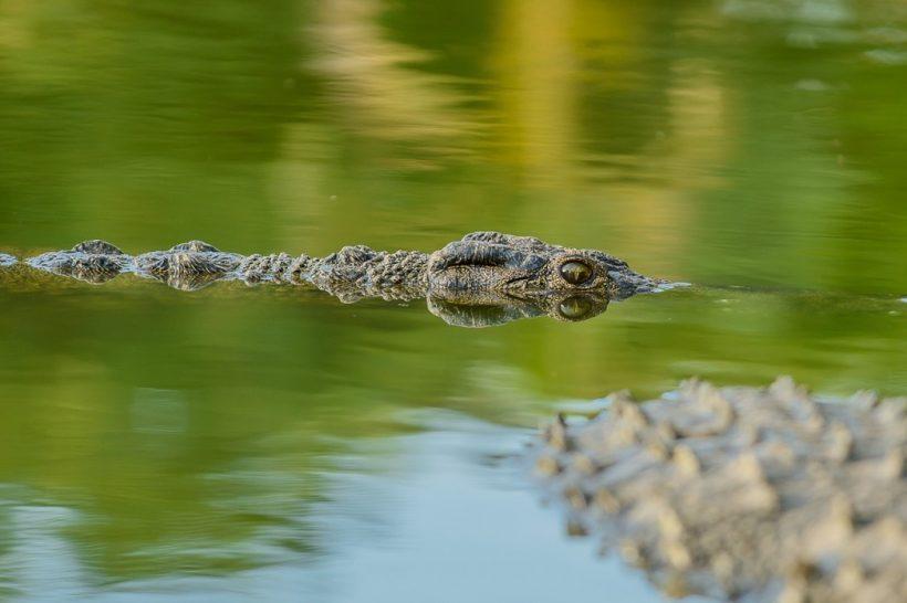 Seronera-Crocodile-farm-120