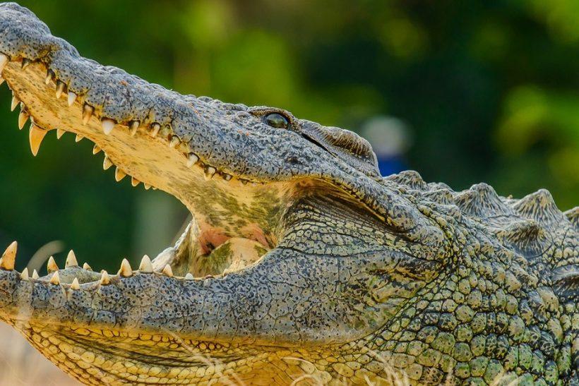Seronera-Crocodile-farm-132