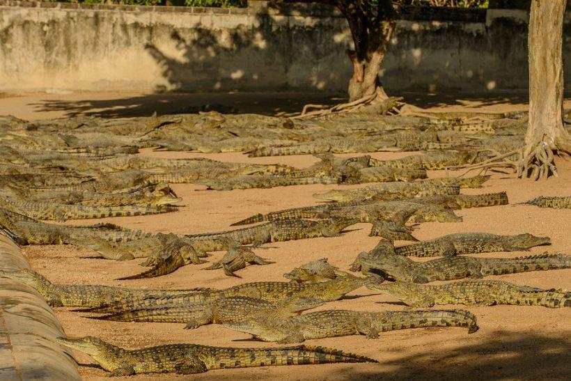 Seronera-Crocodile-farm-138