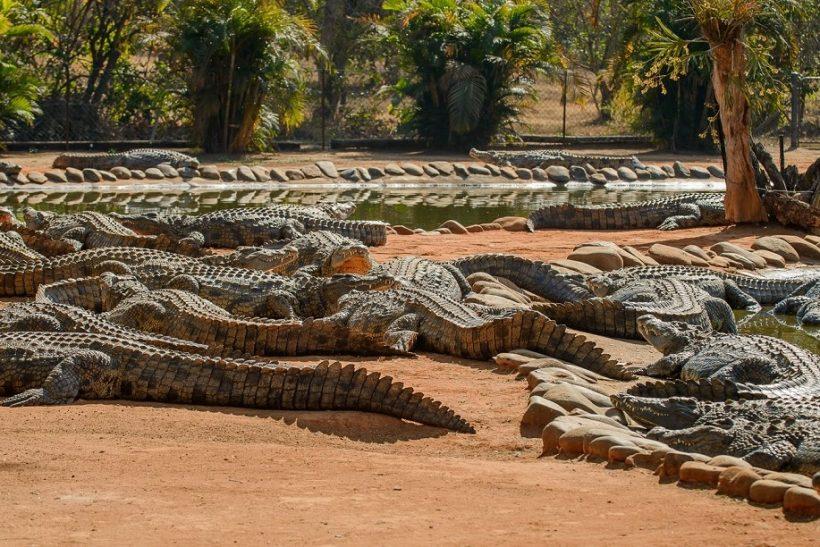 Seronera-Crocodile-farm-29