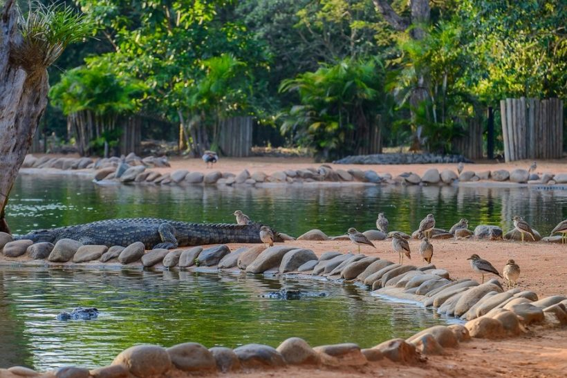 Seronera-Crocodile-farm-88