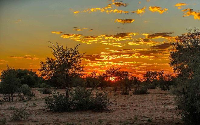 Bushveld-landscape
