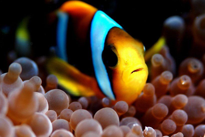 Donna-Scherer-Fisheyeafrica_0026-13