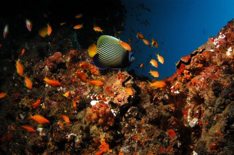 Donna-Scherer-Fisheyeafrica_0026-5