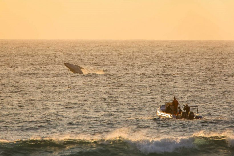 TBL-Whale-viewing-from-deck-with-boat-1