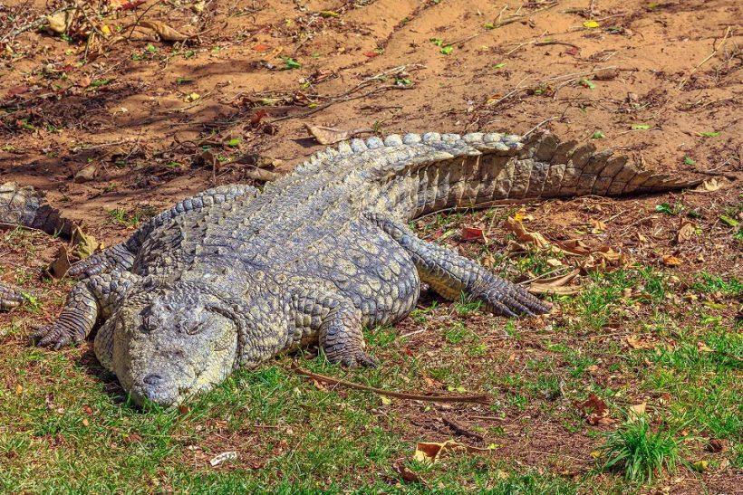 croc-isimangaliso-1