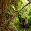 kosi-forest-walk2