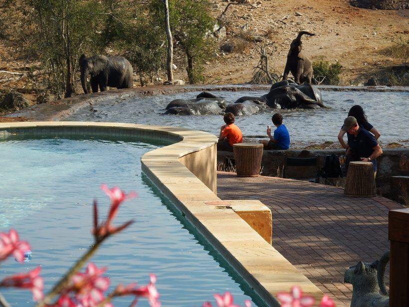 ndzuti-safari-camp
