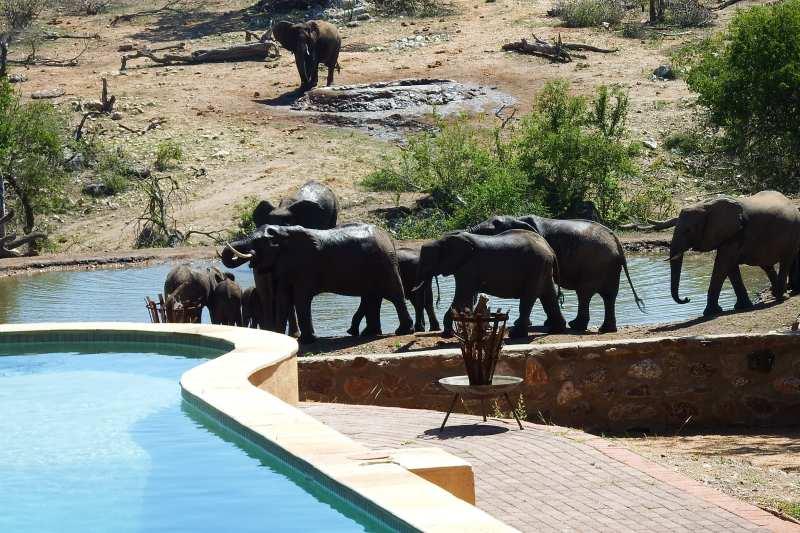 ndzutisafaricamp-20523-242361